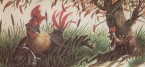El gallo quiquiriqui